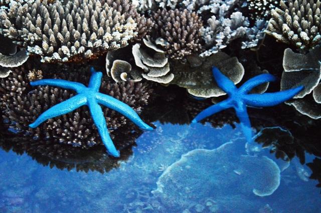 Quảng Ngãi: Khám phá rặng san hô tuyệt đẹp ở gành Yến - 6