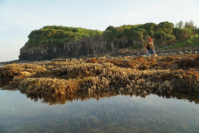 Quảng Ngãi: Khám phá rặng san hô tuyệt đẹp ở gành Yến - 7