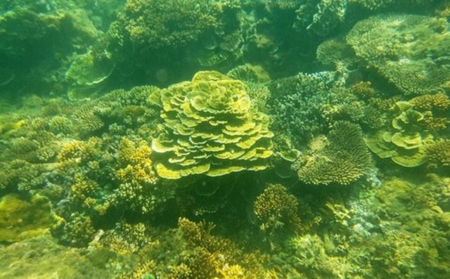 Quảng Ngãi: Khám phá rặng san hô tuyệt đẹp ở gành Yến - 5