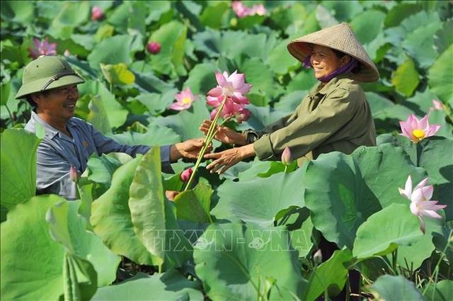 Thơ mộng sen hồng vùng đất cố đô Ninh Bình - 6