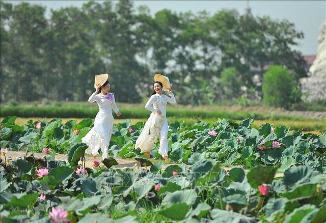 Thơ mộng sen hồng vùng đất cố đô Ninh Bình - 7