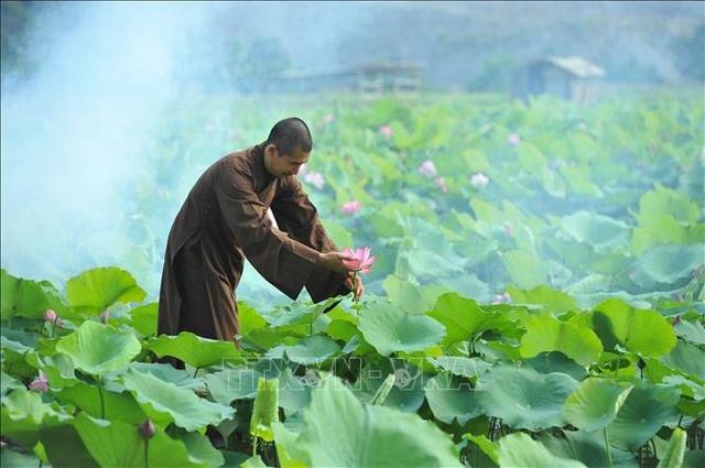 Thơ mộng sen hồng vùng đất cố đô Ninh Bình - 8