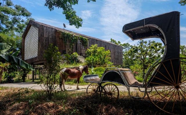 Chán biệt thự phố, vợ chồng Việt về quê làm nhà tranh giữa vườn cây, ao cá - 3