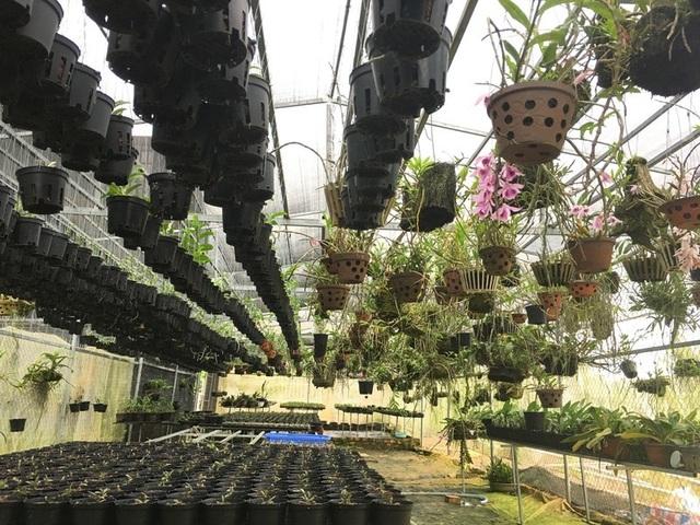 Bán cả tạ cà phê mua 1 cây lan rừng, sau 2 năm sở hữu cơ ngơi tiền tỷ - 4