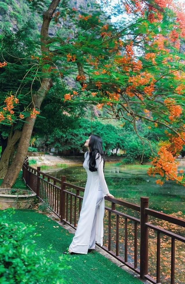 """Phượng mọc giữa nhà gỗ, hồ sen nở rộ gây sốt ở """"thánh địa sống ảo"""" - 1"""