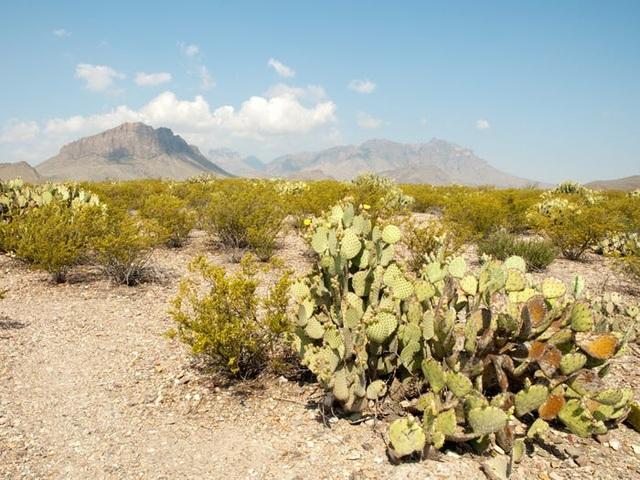 13 sa mạc đẹp nhất thế giới - 4