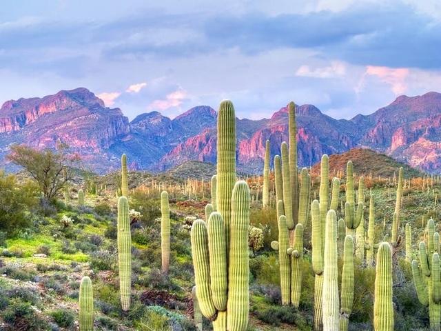 13 sa mạc đẹp nhất thế giới - 11