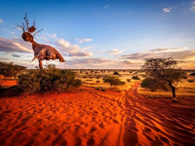 13 sa mạc đẹp nhất thế giới - 13