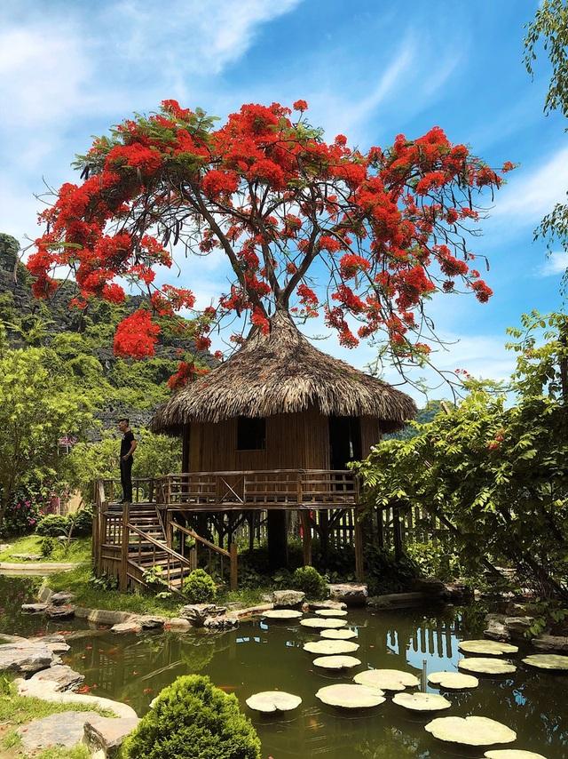 """Phượng mọc giữa nhà gỗ, hồ sen nở rộ gây sốt ở """"thánh địa sống ảo"""" - 2"""