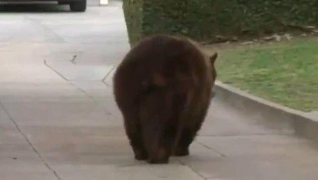 Bị gấu tấn công trong khi ngủ ở sân, người phụ nữ đánh trả bằng... laptop