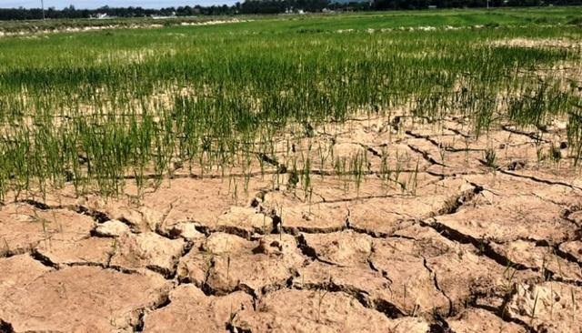 Người dân phải bỏ hoang hàng nghìn ha đất vì nắng hạn - 3