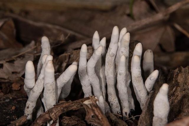 Vật thể lạ như bàn chân người chết thò ra dưới khúc gỗ - 2