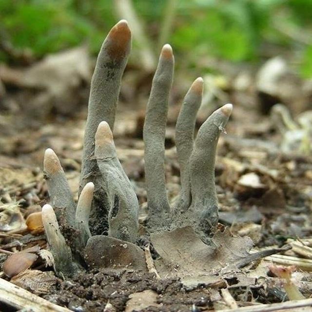 Vật thể lạ như bàn chân người chết thò ra dưới khúc gỗ - 3