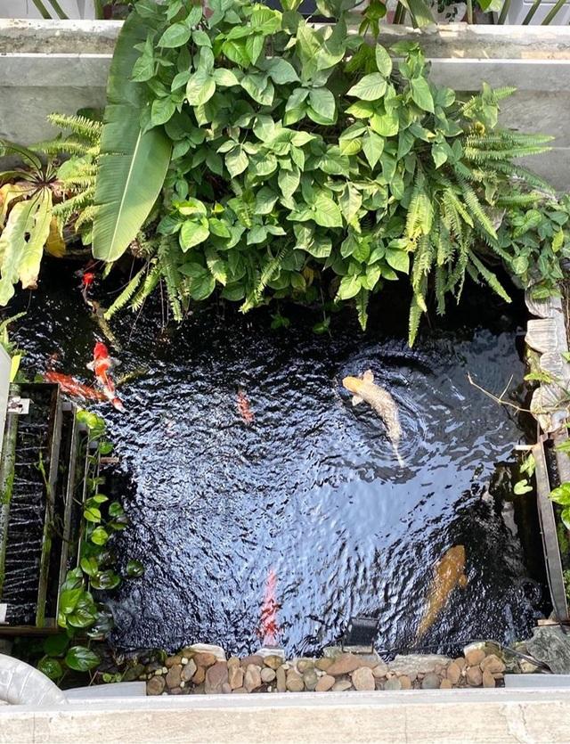 Mẹ đảm Hải Phòng trồng rau, nuôi cá trên sân thượng biệt thự triệu USD - 9