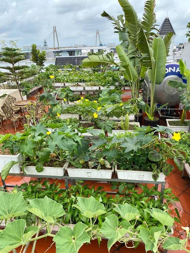 Mẹ đảm Hải Phòng trồng rau, nuôi cá trên sân thượng biệt thự triệu USD - 2