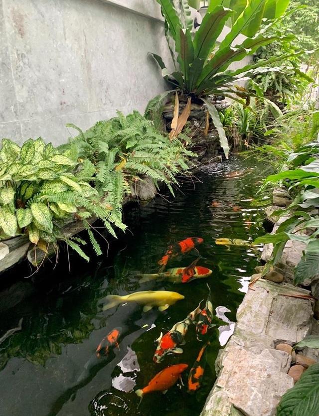 Mẹ đảm Hải Phòng trồng rau, nuôi cá trên sân thượng biệt thự triệu USD - 8