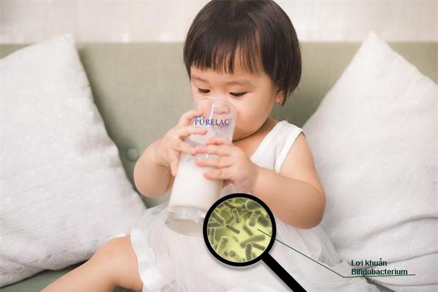 Sữa PureLac bổ sung lợi khuẩn Bifidobacterium cho trẻ hệ tiêu hóa khỏe mạnh - 2