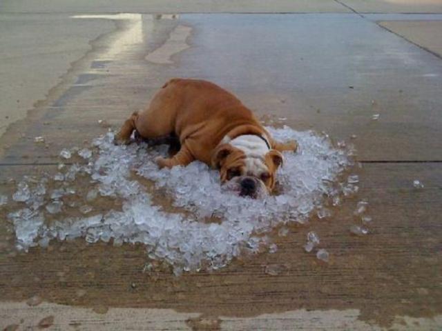 Dân mạng thi nhau chế ảnh cực hài hước mùa nắng nóng - 12