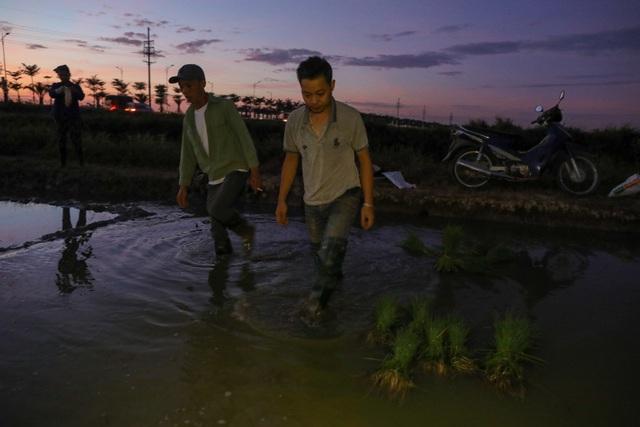 Nông dân Hà Nội đeo đèn pin đi cấy lúc nửa đêm - 3