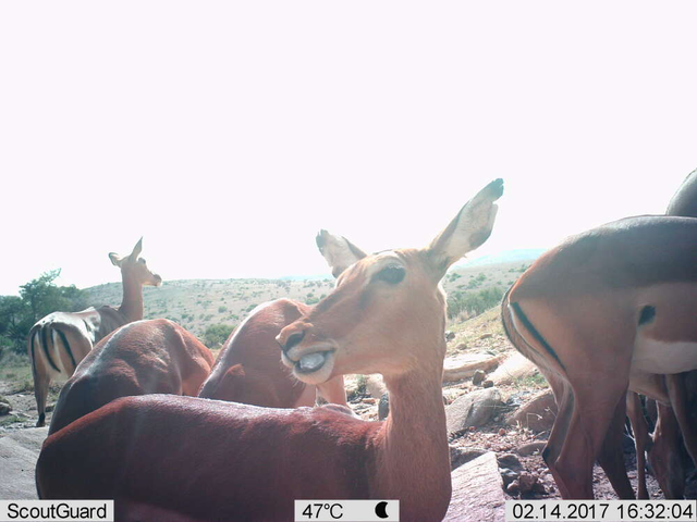 Chùm ảnh tự sướng của các loài động vật - 4