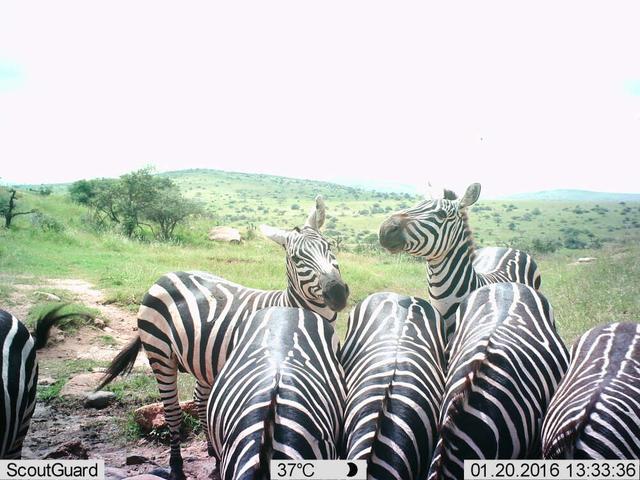 Chùm ảnh tự sướng của các loài động vật - 5