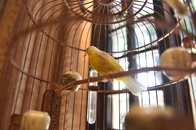 Mãn nhãn với bộ sưu tập chim quý hiếm, giá khủng của vua chim màu Việt - 12