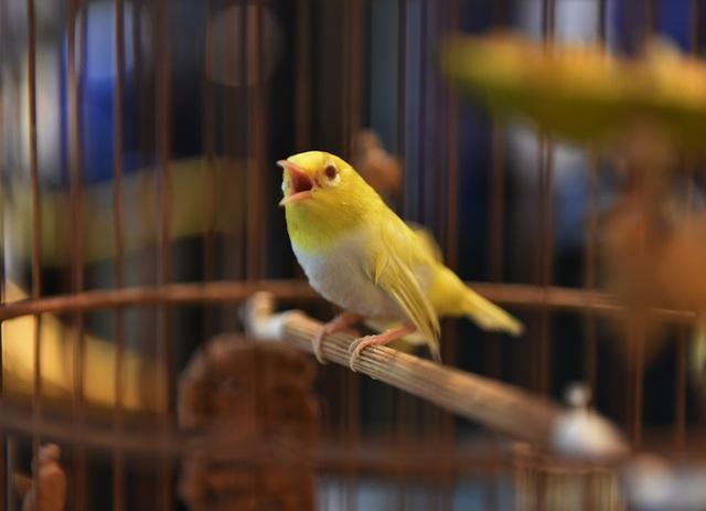 Mãn nhãn với bộ sưu tập chim quý hiếm, giá khủng của vua chim màu Việt - 3