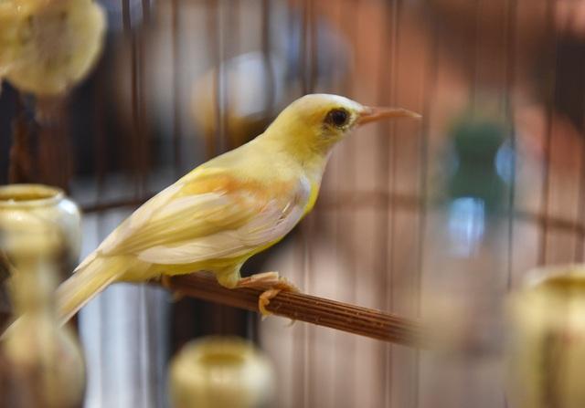 Mãn nhãn với bộ sưu tập chim quý hiếm, giá khủng của vua chim màu Việt - 15