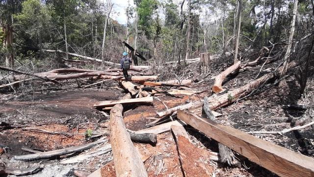 Tạm giữ 7 đối tượng liên quan đến vụ phá rừng quy mô lớn tại huyện Kbang - 1