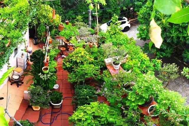"""Độc đáo nhà 3 tầng phủ kín cây xanh của """"dị nhân"""" chơi cây nổi tiếng - 3"""