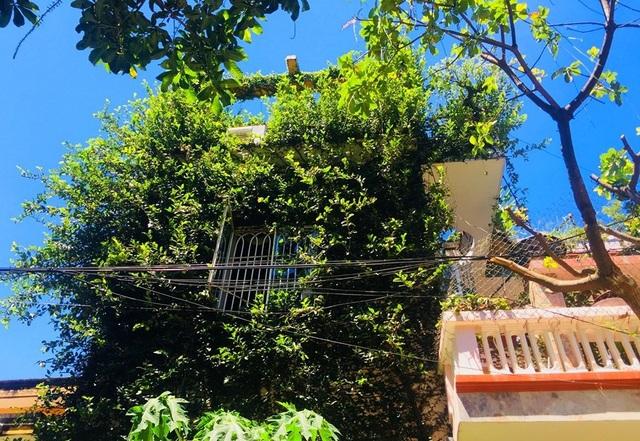 """Độc đáo nhà 3 tầng phủ kín cây xanh của """"dị nhân"""" chơi cây nổi tiếng - 2"""