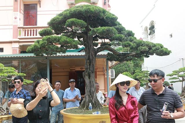 Choáng với cây cảnh hơn 300 tuổi của đại gia Phú Thọ, có người trả 23 tỷ đồng vẫn không bán - 1