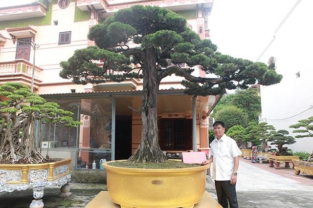 Choáng với cây cảnh hơn 300 tuổi của đại gia Phú Thọ, có người trả 23 tỷ đồng vẫn không bán - 2