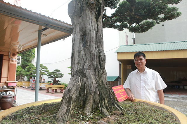 Choáng với cây cảnh hơn 300 tuổi của đại gia Phú Thọ, có người trả 23 tỷ đồng vẫn không bán - 3