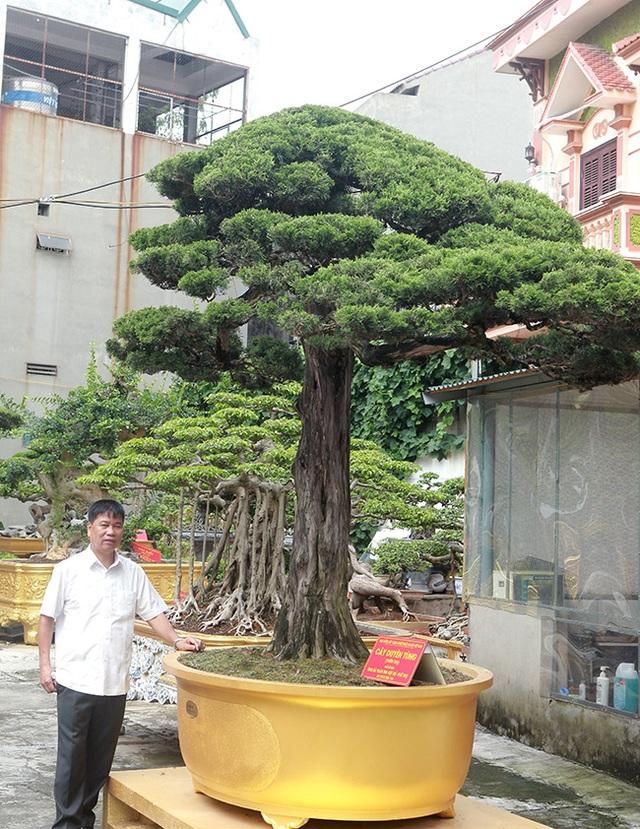 Choáng với cây cảnh hơn 300 tuổi của đại gia Phú Thọ, có người trả 23 tỷ đồng vẫn không bán - 7