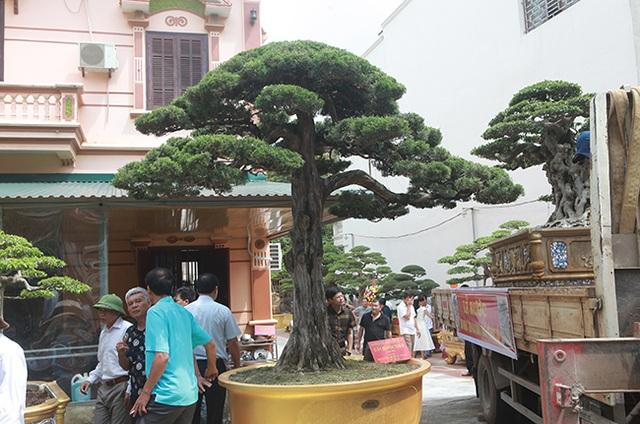 Choáng với cây cảnh hơn 300 tuổi của đại gia Phú Thọ, có người trả 23 tỷ đồng vẫn không bán - 9