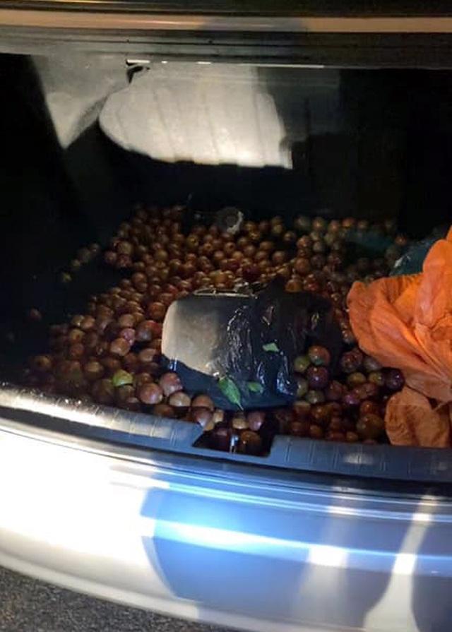 Ngụy trang ma túy trong bao tải mận, vận chuyển từ Sơn La về Hà Nội - 2