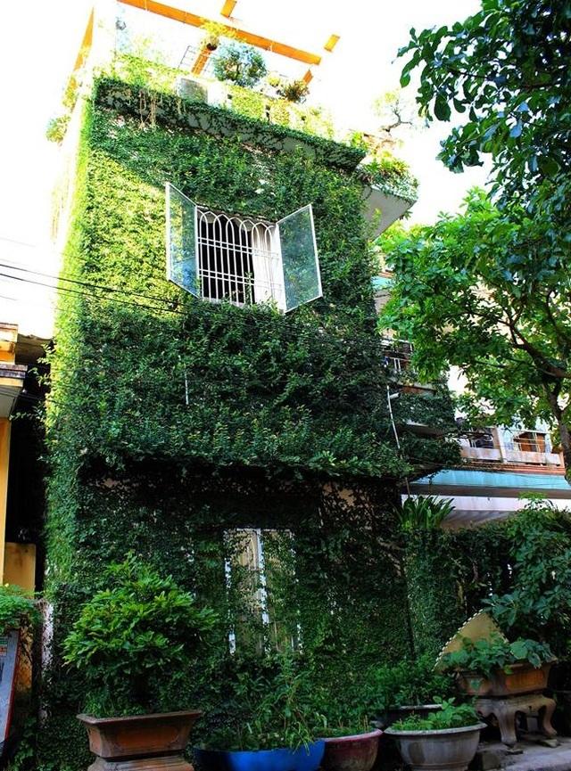 """Độc đáo nhà 3 tầng phủ kín cây xanh của """"dị nhân"""" chơi cây nổi tiếng - 1"""