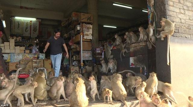 Ở nơi người dân đang phải giành lại thành phố từ... bầy khỉ - 17