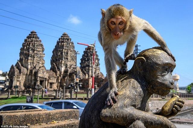 Ở nơi người dân đang phải giành lại thành phố từ... bầy khỉ - 5