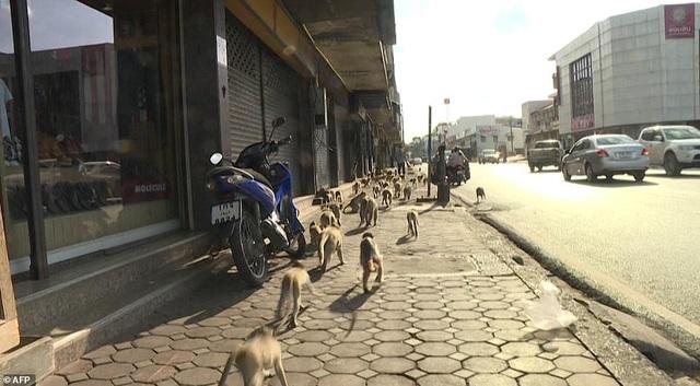 Ở nơi người dân đang phải giành lại thành phố từ... bầy khỉ - 18