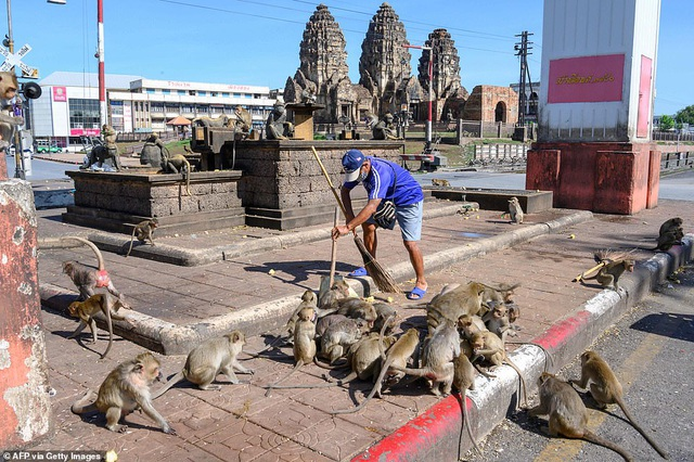 Ở nơi người dân đang phải giành lại thành phố từ... bầy khỉ - 13