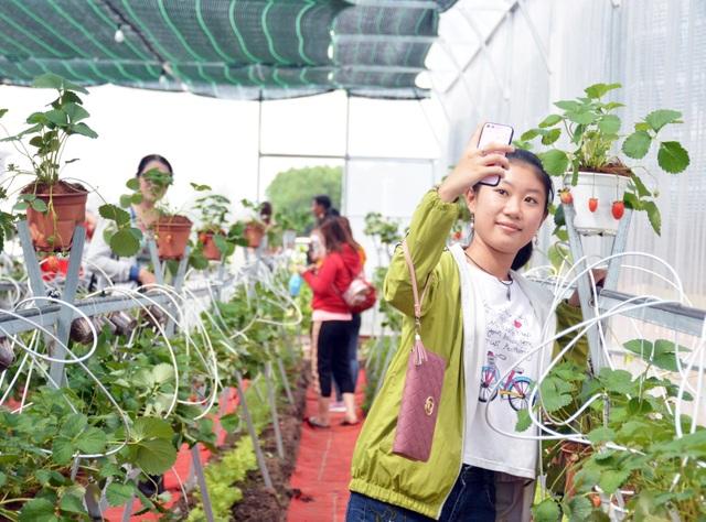 Check-in vườn dâu tây đầu tiên ở Cà Mau - 5