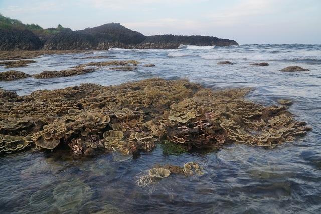 Quảng Ngãi: Rặng san hô tuyệt đẹp tại gành Yến bị xâm hại - 1