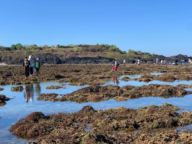 Quảng Ngãi: Rặng san hô tuyệt đẹp tại gành Yến bị xâm hại - 2