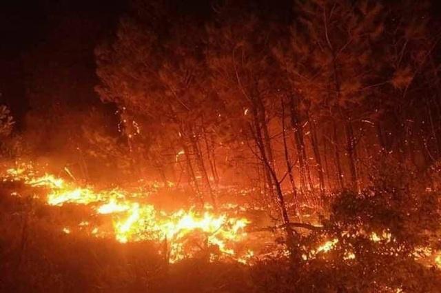 Rừng thông lại bốc cháy, huy động toàn lực để khống chế - 4