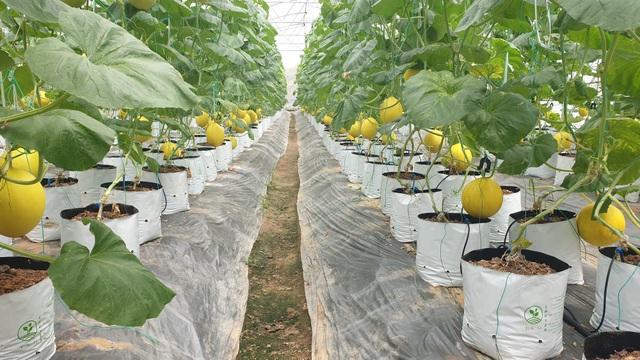 8X biến đồng trũng thành khu nông nghiệp công nghệ cao, thu hàng trăm triệu đồng - 1