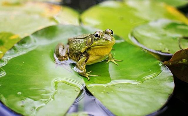 Bài thơ Con ếch điếc - 1