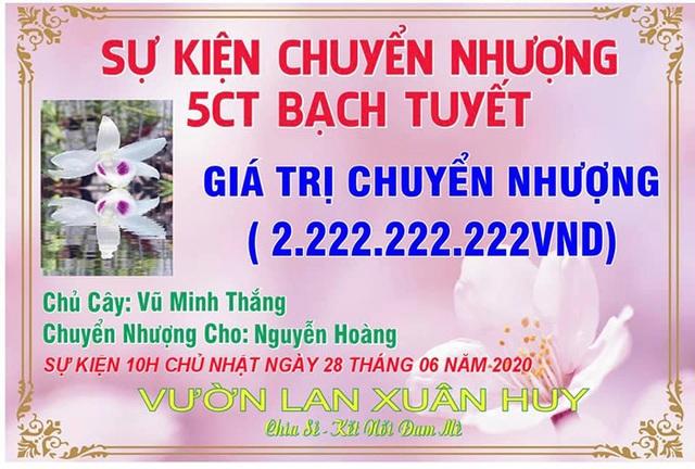 Dân chơi Hưng Yên lên tiếng, 3 mầm lan Bạch tuyết bán 2,2 tỷ đồng - 1