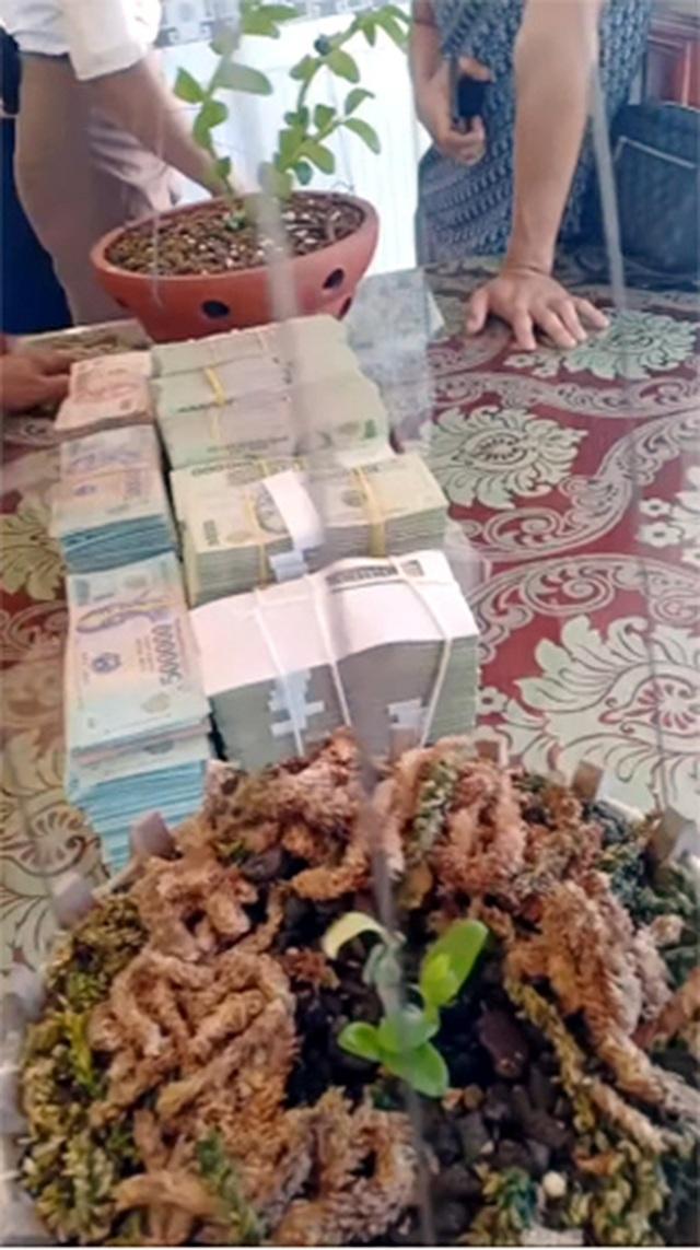 Dân chơi Hưng Yên lên tiếng, 3 mầm lan Bạch tuyết bán 2,2 tỷ đồng - 3